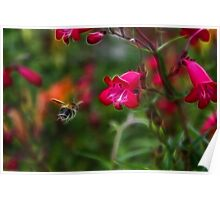 Penstemon and Bee in Flight - Fractalius Poster