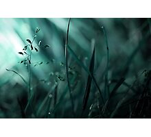 With Beauty, Comes Loss Photographic Print
