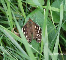 Butterfly by amordj