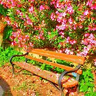 Garden Bench by Vicki Spindler (VHS Photography)