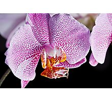Pink Orchid Photographic Print