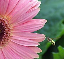 Gerbera and Guest by DiEtte Henderson