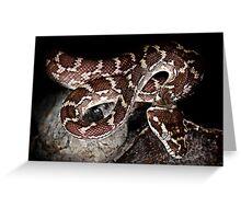 Rough Scaled Python [Morelia carinata] Greeting Card
