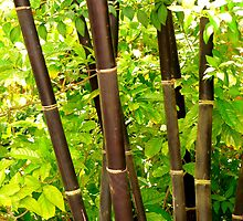 Bamboo Trees by Rosalie Scanlon