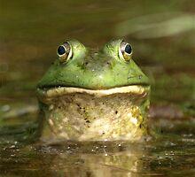Bull Frog  by main1