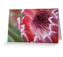 Protea, Australian Native Flower Greeting Card