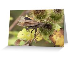 Thistle Hopper Greeting Card