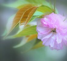 Pink Blossom #2 by Laurie Minor