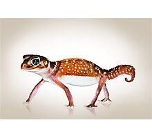Smooth Knobtail Gecko [Nephrurus levis levis] Photographic Print