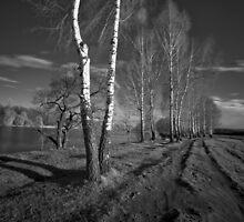 Birch Way Infrared 02 by fine
