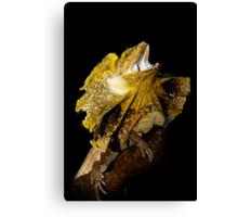 Frilled Lizard [Chlamydosaurus kingii] Canvas Print