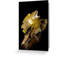 Frilled Lizard [Chlamydosaurus kingii] Greeting Card