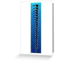 Orlando, San Diego and San Antonio Orcas by Size Greeting Card