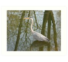 Waterbird in Austria Art Print