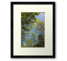 Sunshine in April Framed Print