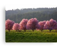 Blossoms in the Fields..*Spring is Coming* Canvas Print
