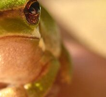 Portrait of a Frog by LillyCherie