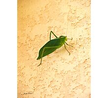 Green Creature Photographic Print