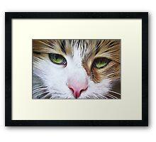 Loyal Cat Framed Print