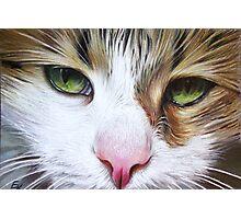 Loyal Cat Photographic Print
