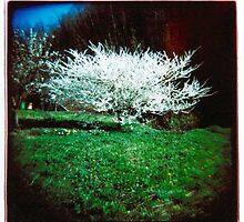 Arbre en Fleur by BostonClick