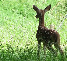 First Fawn! by DottieDees