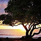 Kauai - Hello Sunrise by Candy Gemmill