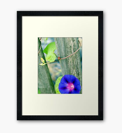 The Lady & The Glory... Framed Print