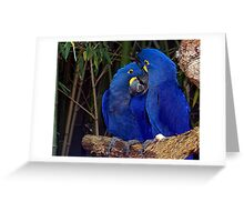 Royal Blue's Greeting Card