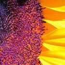 Eye of the Sunflower by Terri~Lynn Bealle