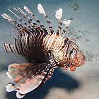 Lionfish  by Anders Hollenbo