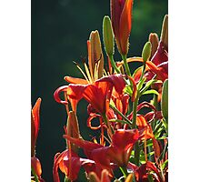 More Daylilies Remembered Photographic Print