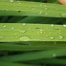 Wet Grass by LaureateLL