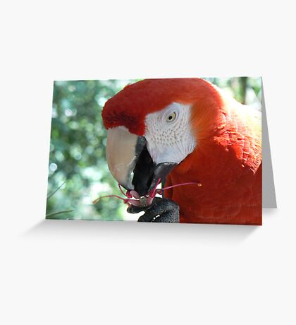 Parrot eating flower Greeting Card