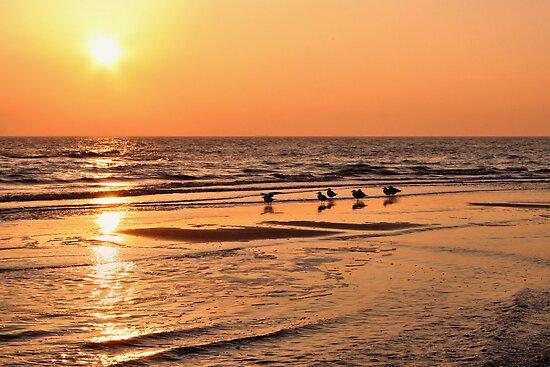 Golden Sunset Glow by Jo Nijenhuis