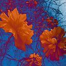 Cheery poppies by sarnia2