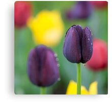 Dark-violet Tulips Flower Canvas Print