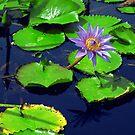 Chinese Water Garden by Mark Wilson