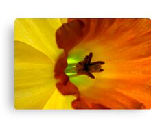Daffodil Abstract I Canvas Print
