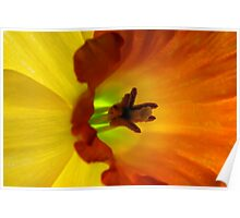 Daffodil Abstract I Poster