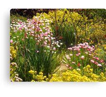 Australian wildflowers, Kings Park, Perth, Western Australia. Canvas Print