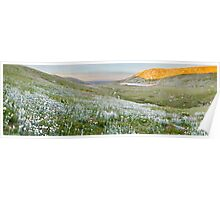 Wildflowers, Lake Cootapatamba, Kosciuszko, New South Wales, Australia Poster