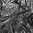 Bamboo leaves. by Andrew Ferguson