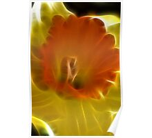 Evening Daffodil Dreams Poster