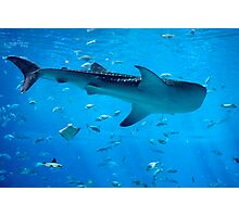 King of the Tank Photographic Print