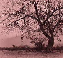 Pink Desolation by richard-harlos