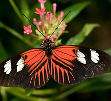 Longwing Butterfly by Bonnie T.  Barry