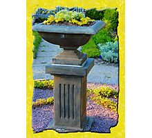 Fountain of flowers  Photographic Print