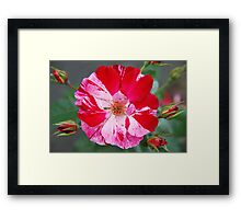 Nature's Abstract Art... Framed Print