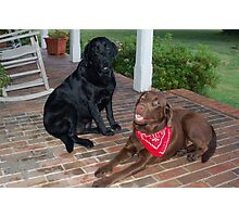 Ruby and Clyde Photographic Print